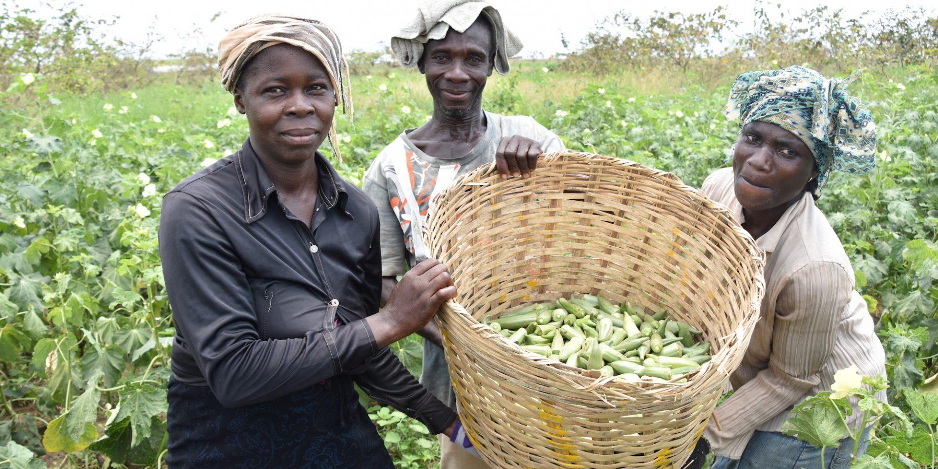 Okraodlarna Joyce, Franklin och Victoria, visar delar av skörden i Mem Chemfre, i östra Ghana 2020. Idag uppmärksammas World Hunger Day av organisationen The Hunger Project.