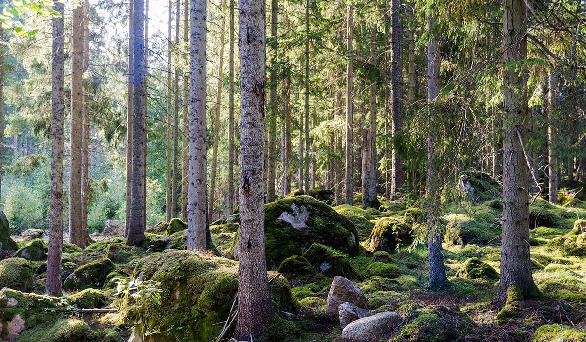 I oktober 2010 enades världens länder om en tioårig strategisk plan för att skydda den biologiska mångfalden. Tio år senare har Sverige inte lyckats uppnå målen.