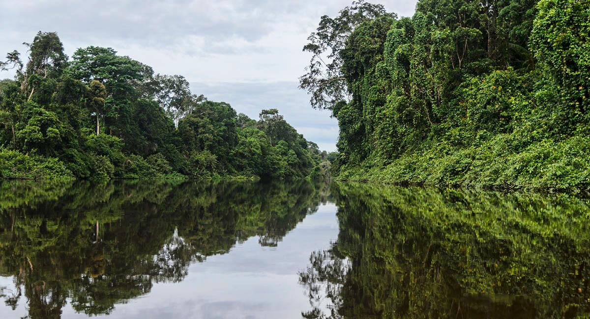 Kamerun har flera vackra regnskogar och nationalparker, men få känner till de övergrepp på begås av de parkvakter som är anställda för att skydda parkerna.