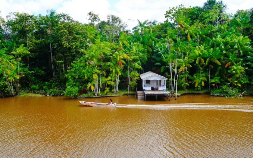 Karipunafolket har lyckats stoppa skogsavverkning på sina marker i Amazonas, i Brasilien.