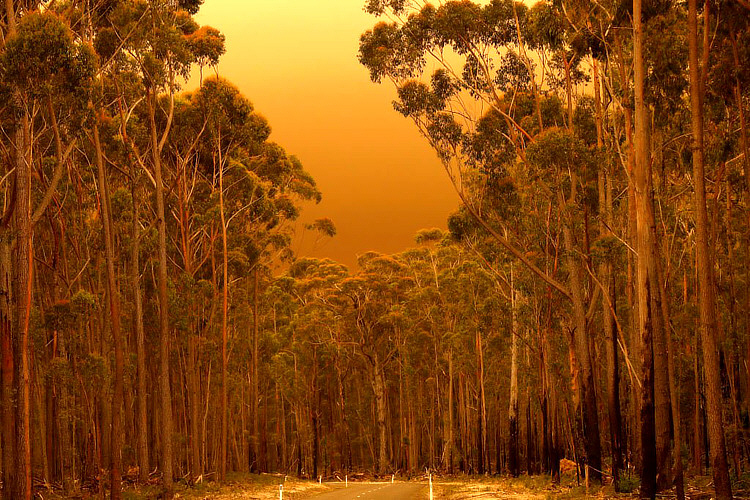 Tusentals människor fick kring årsskiftet 2019/2020 evakueras från East Gippsland, i Australien på grund av de omfattande skogsbränder som drabbat landet.