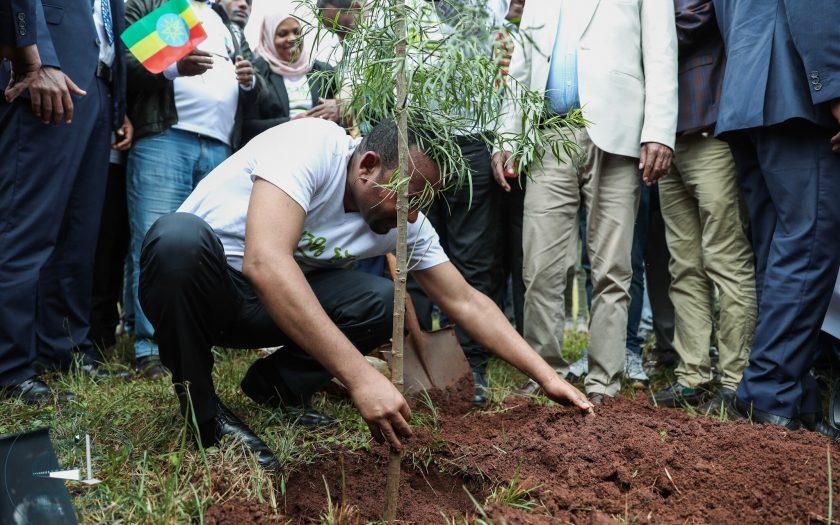 Etiopiens premiärminister planterar träd, ett nationellt initiativ för att motverka erosion och torka. Enligt forskare kan det också vara ett sätt att vinna tid för att ställa om klimatet.