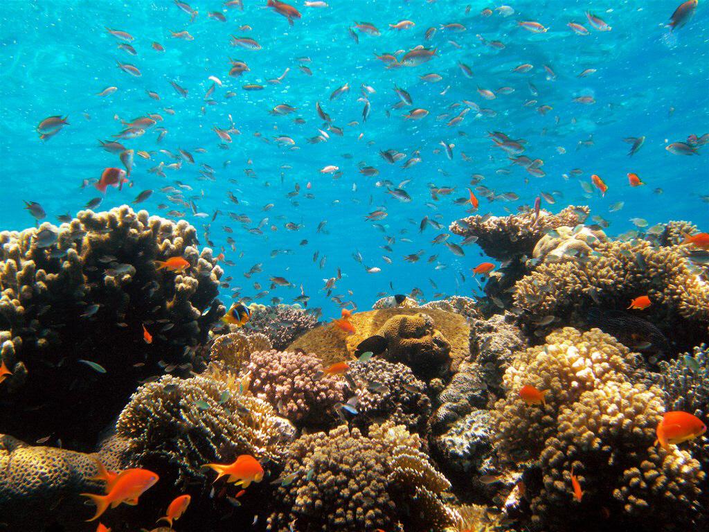Länder vid Röda havet, som står på olika sidor i Israel-Palestina-konflikten, samarbetar i nytt forskningsprojekt för att rädda korallreven.