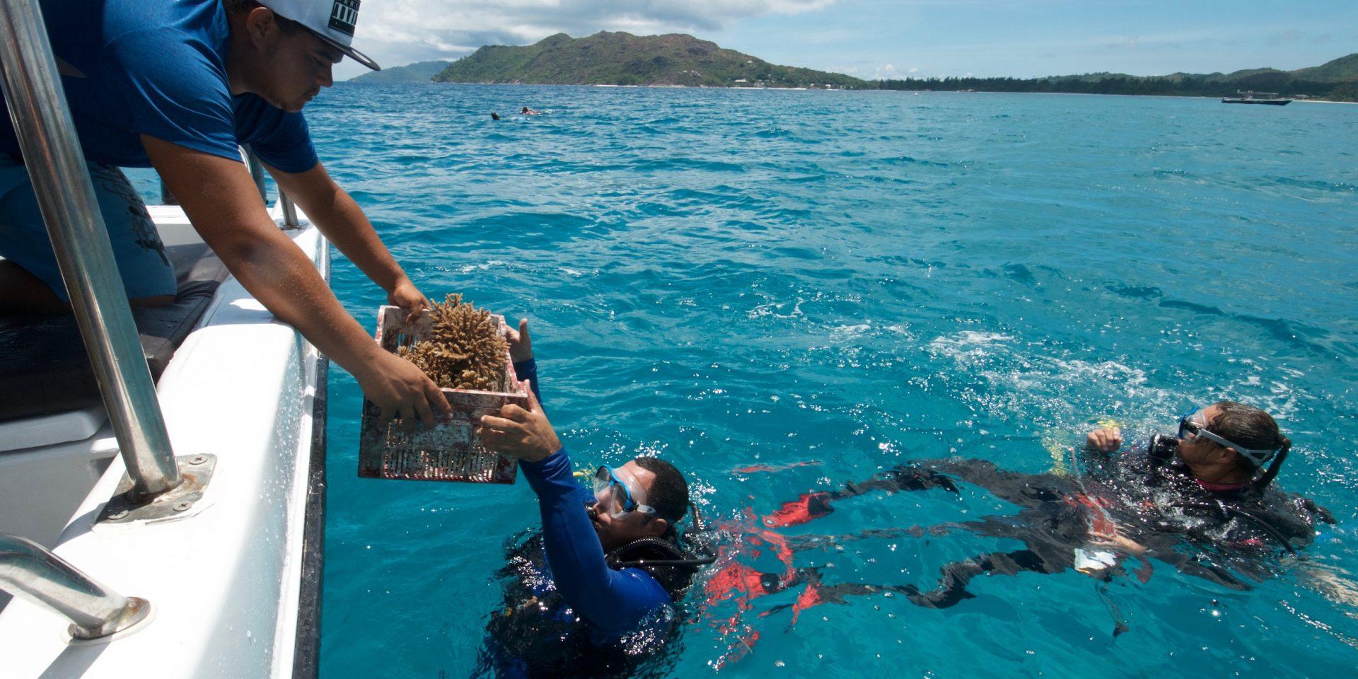 En av februaris hoppfulla nyheter är att två stora havsområden vid Seychellerna har fått marint skydd. Här lämnas koraller som odlats i labb över till en dykare för att återintroduceras.