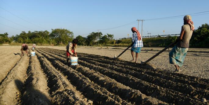 Barn jobbar på potatisåker i Indien. Andelen barn som jobbar har ökat de senaste åren, särskilt inom jordbruket.