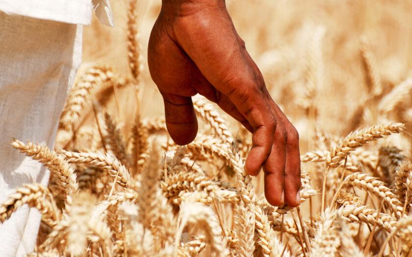FN-toppmötet om livsmedel ska hitta hållbara lösningar för matförsörjningen i världen.